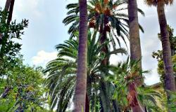 Jardines de Alfabia. Mallorca