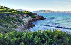 Manresa - playa en Alcudia