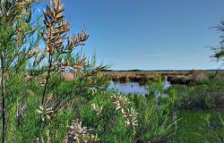Parc Natural S'Albufera